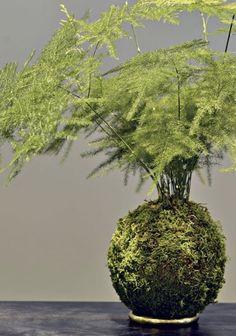 9 plants to create kokedama - Pink Rezepte String Garden, Staghorn Fern, Plant Art, Garden Club, Types Of Plants, Ikebana, Permaculture, Amazing Gardens, Houseplants