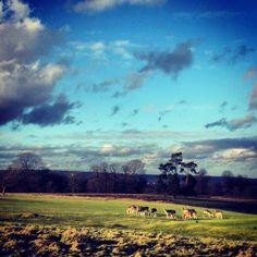 Knole Park, Kent, England http://www.nationaltrust.org.uk/knole/