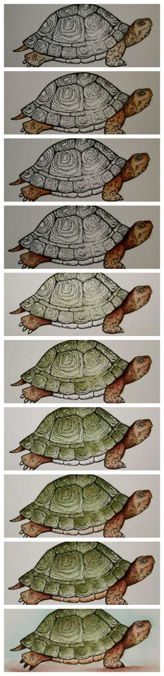 Watercolouring the Turtle from Nature's Nest.  Full Details at www.alisatilsner.com