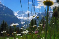 Swiss Alps - I want to go again.
