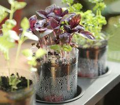 wasserspender automatische bew sserung ihrer zimmerpflanzen und topfpflanzen pflegeleichter. Black Bedroom Furniture Sets. Home Design Ideas