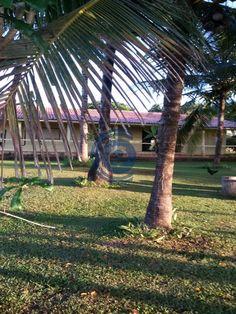 Fazenda de 330 Alqueires no município de Santana do Araguaia, terra de dupla…