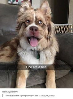 21 Funny Animal Pics for Your Tuesday                                                                                                                                                                                 More