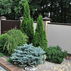 Shrubs For Landscaping, Front Yard Patio, Garden Yard Ideas, Small Garden Design, Beautiful Gardens, Outdoor Gardens, Landscape Design, Backyard, Exterior