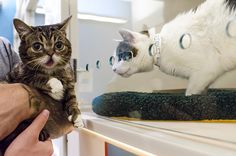 LIL BUB is CEO for the day at the ASPCA