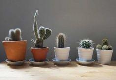 Piante in inverno: ecco come prendercene cura  #piante #plants #winter