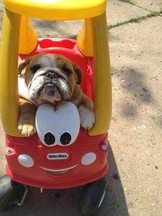 I want a peddle car...