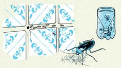 Como matar insetos feito um ninja? | Superinteressante