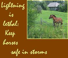 What safety precautions ought horse owners to take during electrical storms?