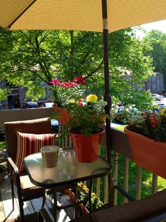 My patio garden! I am really, really rocking the apartment life now!