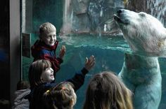 Check out these 9 zoos in Upstate New York with tigers, baby goats, poison dart frogs, more