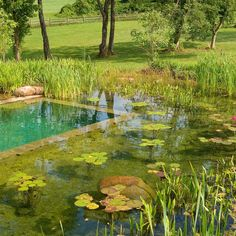 Natural Swimming Pool Design Ideas How to Build A Natural Swimming Pool Natural Swimming Pool Design Ideas. If you want a backyard pool, but don't want to spend tens of thousands of dollars i… Swimming Pool Pond, Natural Swimming Ponds, Natural Pond, Swimming Pool Designs, Backyard Pool Designs, Modern Backyard, Backyard Ponds, Backyard Ideas, Pond Waterfall