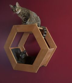 The Octagon Cat shelf    Wall Mounted Cat Shelf HabiCat 3