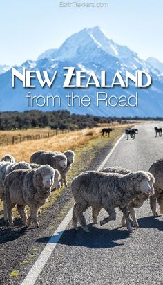 New Zealand from the road. New Zealand is a great destination for a road trip...check out these photos of the North and South Islands.