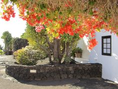 Garden at Lanzarote Island by Heinz-Jörg Kretschmer on 500px