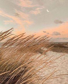 Beach Aesthetic, Brown Aesthetic, Aesthetic Photo, Aesthetic Pictures, Summer Aesthetic, Nature Aesthetic, Aesthetic Collage, Travel Aesthetic, Aesthetic Backgrounds