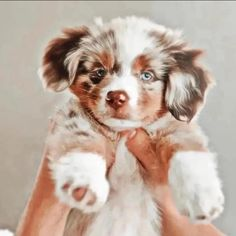 Super Cute Puppies, Baby Animals Super Cute, Cute Baby Dogs, Cute Little Puppies, Cute Cats And Dogs, Cute Dogs And Puppies, Cute Little Animals, Cute Funny Animals, Doggies