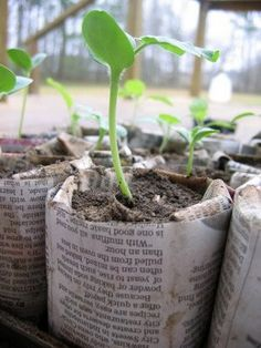 Newspaper pots for starting seeds...when ready to be transplanted, goes in the ground, pot and all!