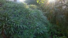 "Furighedda gardening: Intanto nel ""pot ghetto""... - by tyziana"