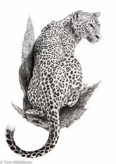 """Saatchi Art is pleased to offer the drawing, """"Leopard,"""" by Tom Middleton. Leopard Tattoos, Animal Sketches, Animal Drawings, Art Drawings, Big Cat Tattoo, Aztecas Art, Motif Jungle, Animals And Pets, Cute Animals"""