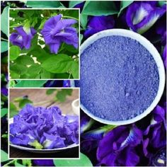 Clitoria Ternatea Powder Butterfly Pea Blue Pea Organic Pure Natural From Thai Purple Roses, Blue Flowers, Different Types Of Tea, Best Herbal Tea, Butterfly Pea Flower, Tea Powder, Coriander Seeds, Perennials, Herbalism