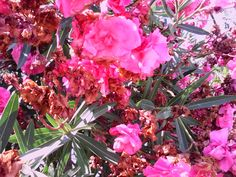 O meu pensamento viaja: 1170 - Flores secas