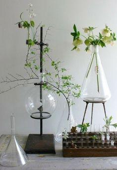 Laboratory Plants