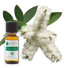 huile essentielle de niaouli nez bouche beaut sant pinterest huile essentielle de. Black Bedroom Furniture Sets. Home Design Ideas