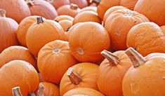25 Harvest-y Things to Do In the Annapolis Valley this October - Hello Weekend Easy Pumpkin Pie, Pumpkin Pie Bars, Pumpkin Picking, Canned Pumpkin, Halloween Background Tumblr, Halloween Backgrounds, Halloween Wallpaper, Unicorn Halloween, Disney Halloween