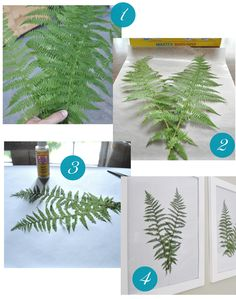 Lay flattened ferns on paper and affix to paper with a tiny bit of Mod Podge or craft glue and display behind glass in frames.