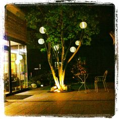 Our garden at night...