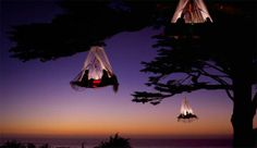 seriously. Hanging magic tree tents.