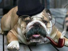 well, this is dapper indeed.  / #dapperdog #monocle #dog /
