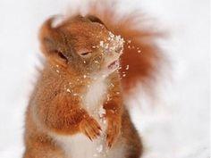 Winterspaß mit tierisch süßen Schnee-Fans - Seite 1