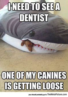 Need To See The Dentist