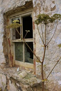 Abandoned?