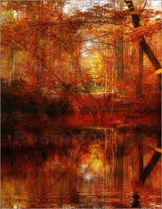Poster Waldzauber im Herbst