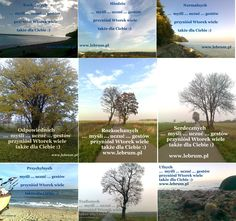 Wtorek  .... jesień 2014   .... więcej na blogach : Przemyślenia o poranku : http://pierwszamysl.blogspot.com/ o szukaniu pracy : http://bez-etatu.blogspot.com/ Widok z okna i komentarz poranka: http://jakimon.blogspot.com o miłosnych perypetiach : http://iruchna.blogspot.com