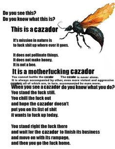 Wasps and their dumb stupid limp legs. But I am not scared! Krystal ain't scared if no wasp if Adam is around. He will ninja kill a wasp for me. I have some wasp killing ninja tendencies also. You wasp don't scared me! Do You Know What, Need To Know, Fear Of Flying, True Stories, Make Me Smile, I Laughed, Laughter, Funny Pictures, Funny Pics