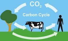 I hope that you all know that plants LOVE our CO2.....they give us O2 in return