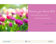 James 1:3 NIV Bible Verse About Faith #NIVBible