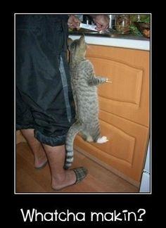 Cuute!
