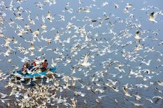 Breathtaking Images of Seagulls Flying Over India's Rivers – Fubiz Media