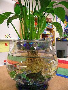 36 Marvelous Water Beads Ideas For Home Indoor Plants Indoor Water Garden, Indoor Plants, Water Gardens, Betta Fish Tank, Fish Tanks, Betta Fish Bowl, Water Beads, Glass Beads, Garden Terrarium