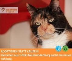 Glückskatze par excellence auf der Suche nach einem Zuhause.  http://www.tierheimhelden.de/katze/tierheim-neubrandenburg/glueckskatze/kleinchen/2530-1/  2006 geboren lässt sich Kleinchen gerne mit Leckerchen für Streicheleinheiten anlocken und tänzelt um den Gönner herum. Gekippt, kastriert und entwurmt wird Kleidchen auch gerne zu einer ruhigen anderen Katze und in Wohnungshaltung vermittelt.