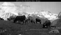 006ph-00844 Cow, Mountains, Nature, Travel, Animals, Photography, Naturaleza, Viajes, Animales