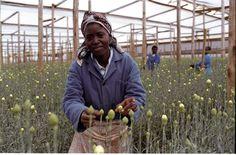 Fair Trade Facts - Voyage Fairtrade