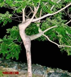 Can you see the ballet dancer in this tree?