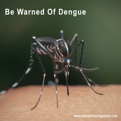 #Dengue - is a #Mosquito-borne Infection.Be Warned Of Dengue in a decrease in temperature.