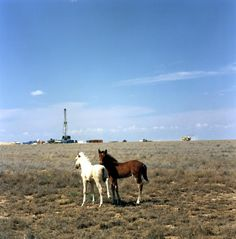 Foals on the Kazakh steppe